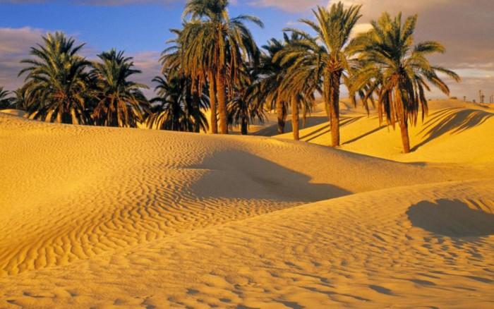 palmeira no deserto