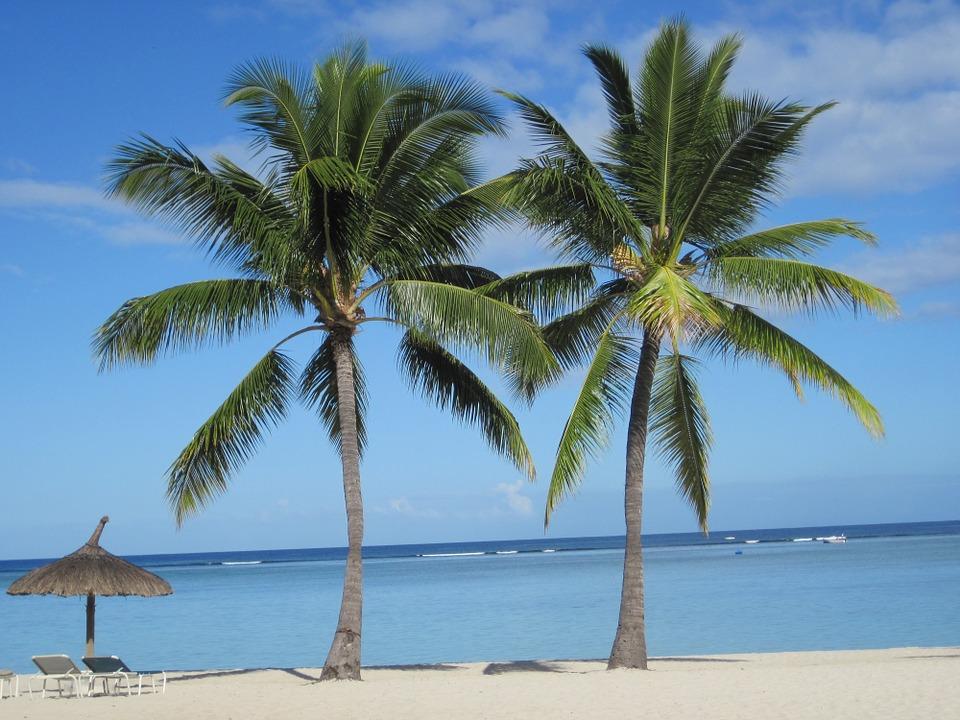 imagem de palmeira