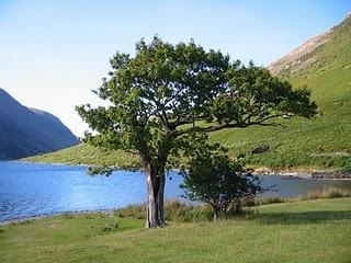 árvore junto ás águas